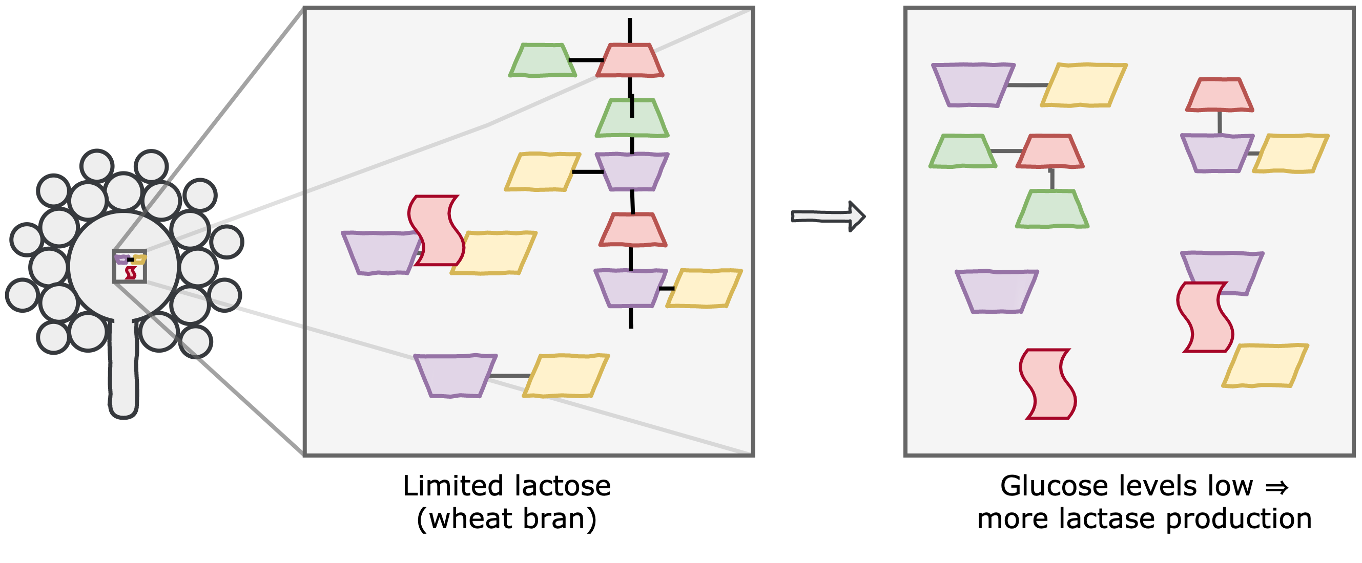wheat_bran_substrate